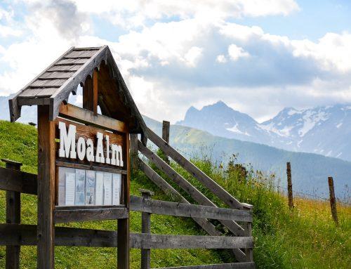 Yoga, escursioni in montagna e cibo vegano in Austria al MoaAlm Mountain Retreat